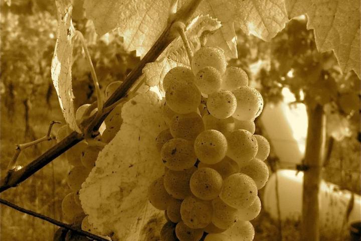 Die Mythischen Weine