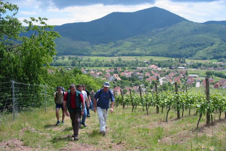 visite du vignoble dans le Linsenberg