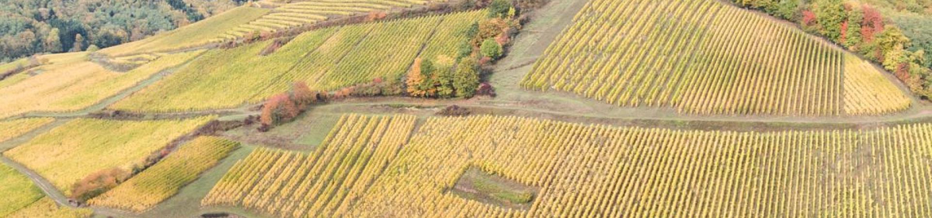 Panorama du domaine Schoenheitz